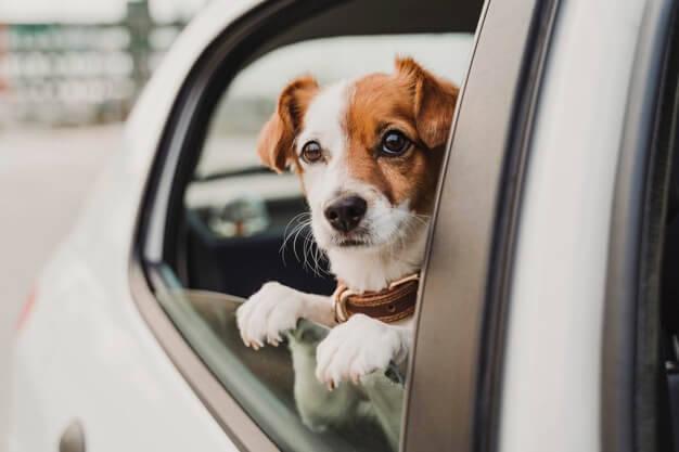 首輪とハーネス、犬にはどちらがおすすめ?