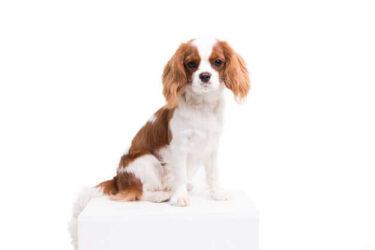 犬の白内障について~第1回~