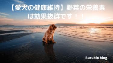 【犬の健康維持】野菜の栄養素は効果抜群です!!
